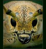 Портрет в желто-зеленом