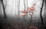 Унылая пора... ( Фотоконкурс «Осенние мотивы» )