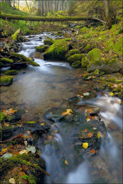 Осенняя текучесть ( Фотоконкурс «Осенние мотивы» )