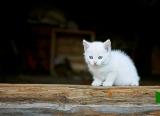 кошки-3