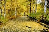 ...по ковру из желтых листьев...
