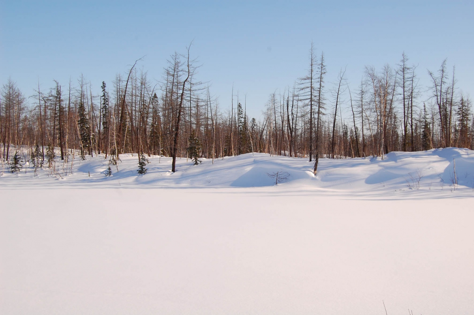 Снежный буран прошел по территории сша