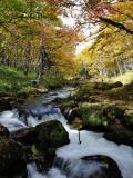 Осенняя речушка