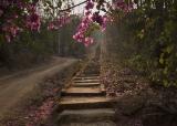 Таиланд. Тысяча ступеней к храму