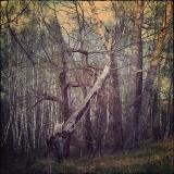 О сломаном дереве