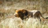 Крымские львы (серия)