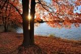 Осень,рыжая подружка.