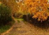 по дороге в осень...