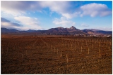 Зимний виноград