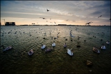 Птичий сход