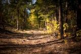 Осенний лес..