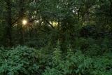 Закат в джунглях поймы реки Медведицы