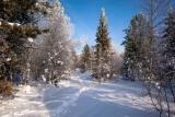 Зима в разгаре..