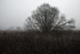 Осенне-туманная