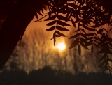 Закат сквозь листья