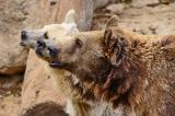 Три медведя в ожидании Маши