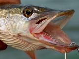 Рыбалка с Nikon