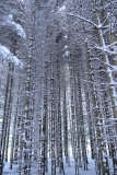 Густой лес завораживает