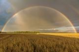 овёс и радуга.jpg