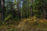 Сентябрьский лес