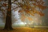 Туманным утром в парке