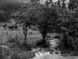 На берегу безымянной реки