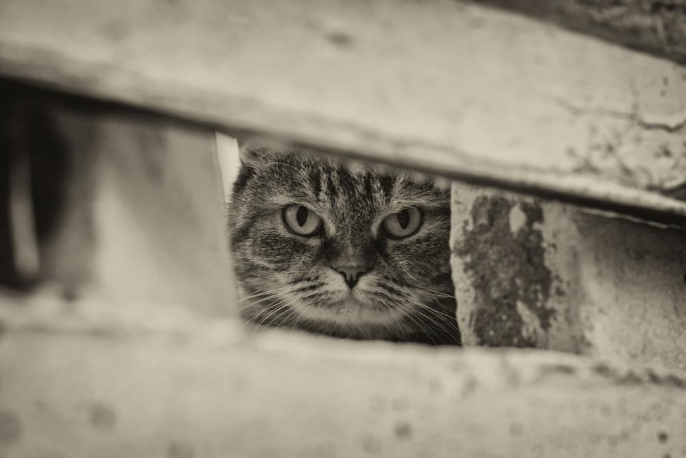 Заметили наблюдателя