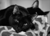 Портрет одного серьёзного кота