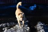 Похождения солнечного пса (серия)