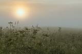 Атмосфера летнего рассвета