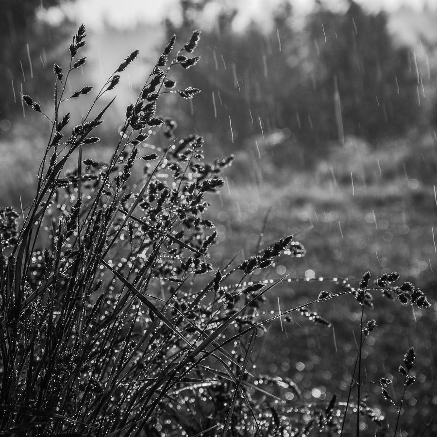 Просто летний дождь прошёл...