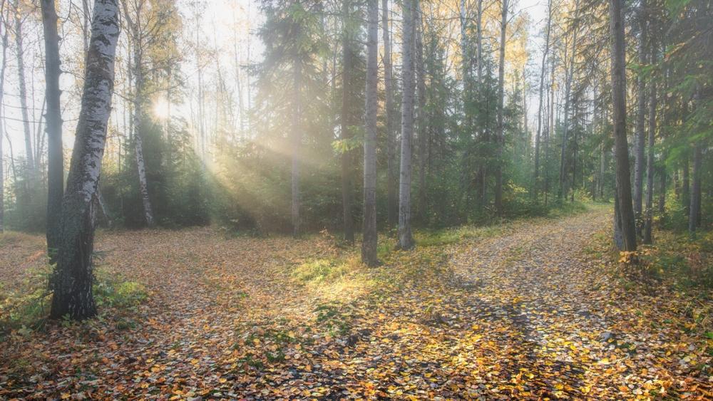 Утренний лес