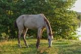 Конь на выгуле.