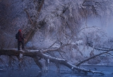Морозные джунгли