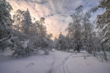 Все тропинки снежком запорошены