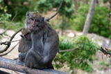 monkeydonna